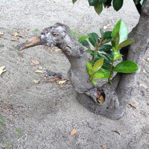 木の根元。よく見ると…